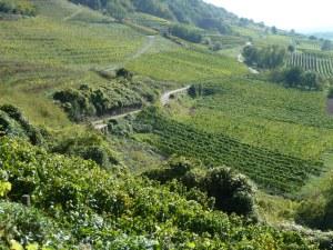 Vineyards near Heidelberg